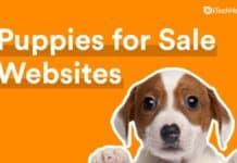 Top 10 Best Puppies for Sale Websites (2021)